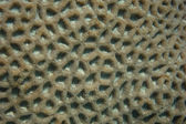 Coral structure — Stock Photo