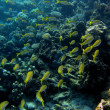 Foto Stock: Many yellow white fish