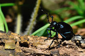 Black beetle on a tree trunk — Stock Photo
