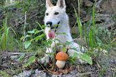 Dog and mushroom — Photo
