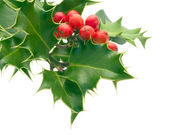 Holly Sprig — Stock Photo