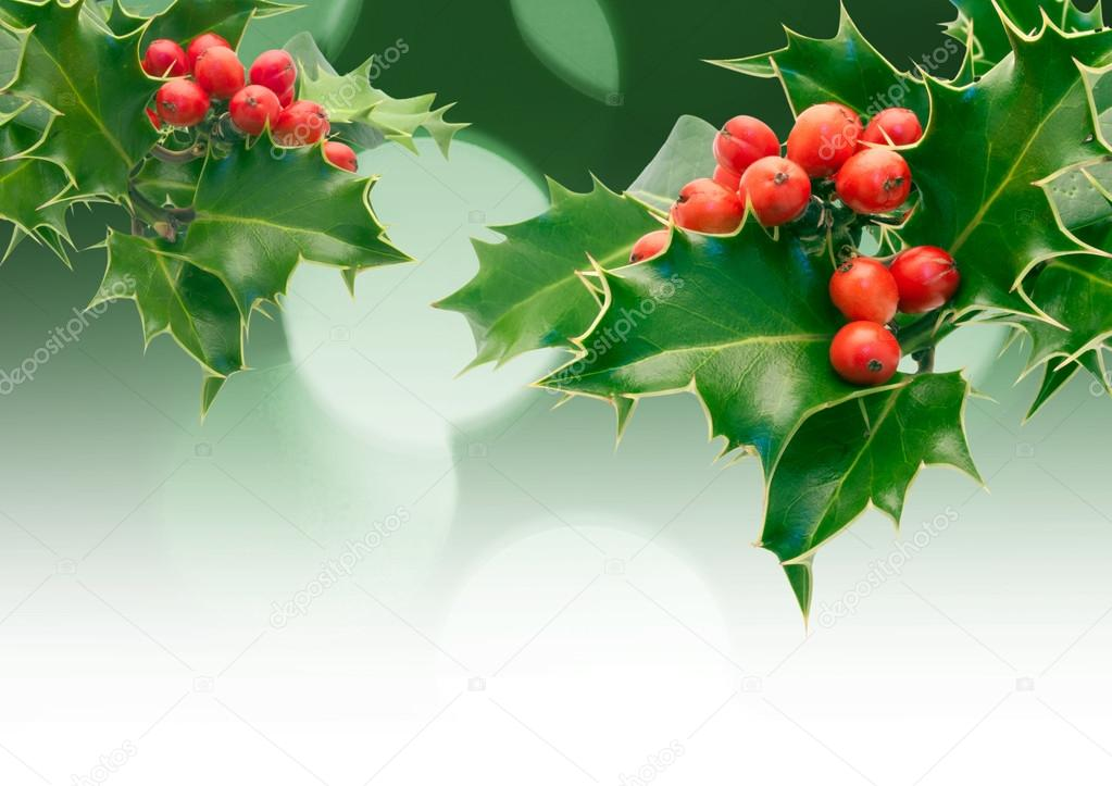 Holly Sprigs with diffused lights — Stock Photo #14526491
