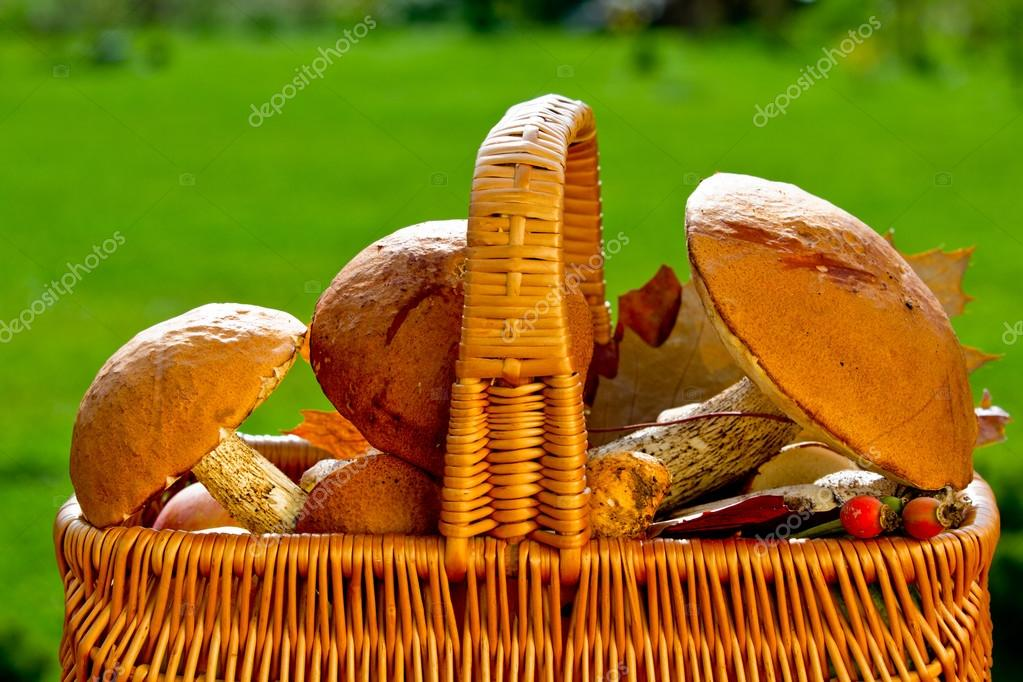 Season for mushrooms - basket of picked edible mushrooms — Stock Photo #13752901