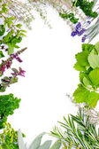 Fresh herbs frame — Stock Photo