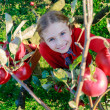 Young girl picking organic Apples into the Basket.Orchard. — Stok fotoğraf