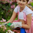 Rose garden - beautiful girl cutting roses in the garden — Stock Photo
