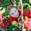 Apple orchard - cute girl picking red apples into the basket — Stock Photo #31300769