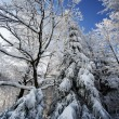 Winter trees in Beskid mountains, Poland — Stockfoto