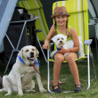 Summer camp - young girl playing with dogs on the camping — Stock Photo