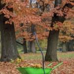 Autumn leaves in wheelbarrow — Stock Photo