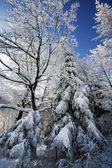 Winter trees in Beskid mountains, Poland — Stock Photo