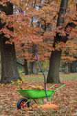 Autumn leaves in wheelbarrow — Stock Photo