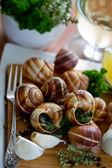 Escargots de Bourgogne (snails with herbs butter) — Stock Photo