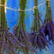 Lavender herbs drying on the wooden barn in the garden — Stock Photo