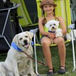 Stock Photo: Summer camp - young girl playing with dogs on the camping