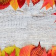 Autumn background - frame from colorful leaves — Stock Photo
