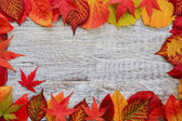 Autumn background - frame from colorful leaves — Foto Stock