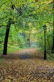 Autumn in misty park — Stock Photo