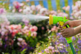 Watering, flower garden - child watering roses with garden hose  — Stock Photo