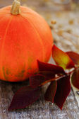 Harvest,  pumpkin with autumn leaves — Stock Photo