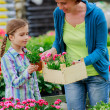 Planting, garden flowers - family shopping plants and flowers in garden center — Stock Photo #47080351