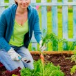 Gardening, cultivation - woman and organically grown carrots — Stock Photo #47081765