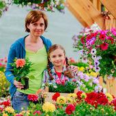 Planting, garden flowers - family shopping plants and flowers in garden center — Stock Photo