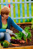 Gardening, cultivation - woman and organically grown carrots — Foto de Stock