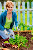 Gardening, cultivation - woman and organically grown carrots — Stock fotografie