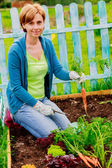 Gardening, cultivation - woman and organically grown carrots — Stock Photo