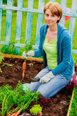 Gardening, cultivation - woman and organically grown carrots — Foto Stock