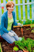 Gardening, cultivation - woman and organically grown carrots — Photo