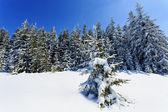 冬天山上树木的游泳衣,波兰 — 图库照片
