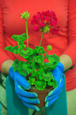Gardening - woman  working in flowers garden — Stock Photo