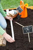Gardening, sowing - woman sowing seeds into the soil — Stock Photo