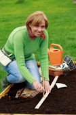 Gardening, sowing - woman sowing sugar peas into the soil — Stock Photo