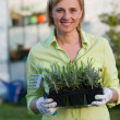 Gardening, planting concept - woman with seedlings in the garden — Stock Photo #47933419