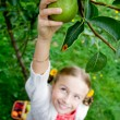 Orchard, fruits - lovely girl picking ripe pear — Stock Photo #48162121
