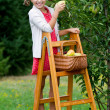 Orchard, fruits - lovely girl picking ripe pear — Stock Photo #48162129