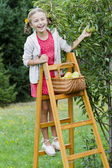Gardening, orchard - lovely girl picking of tree ripe pears — Stock Photo