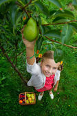 Orchard, fruits - lovely girl picking ripe pear — Stock Photo