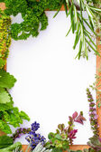 Herbs frame over white background — 图库照片