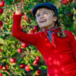 Orchard - girl picking red apples — Stock Photo