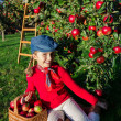 Apple orchard -  girl picking red apples into the basket — Stock Photo #48191987