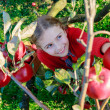 Orchard - girl picking red apples into the basket — Stock Photo #48201245