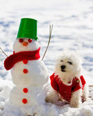 Winter fun - cute puppy playing with snowman — Stock Photo