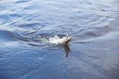 рыбы на крючок — Стоковое фото