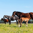Stock Photo: Mare & Foal