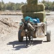 Stock Photo: Donkey carriage