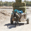 Foto Stock: Donkey carriage